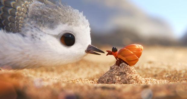 piper-hermit-crab